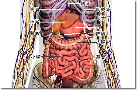 圖片搜尋: 解剖